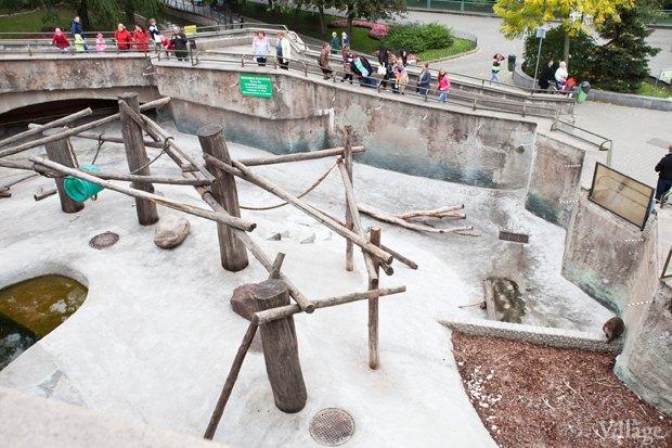 Директор московского зоопарка: «Погода была ужасной, всё выглядело очень грустно». Изображение № 16.