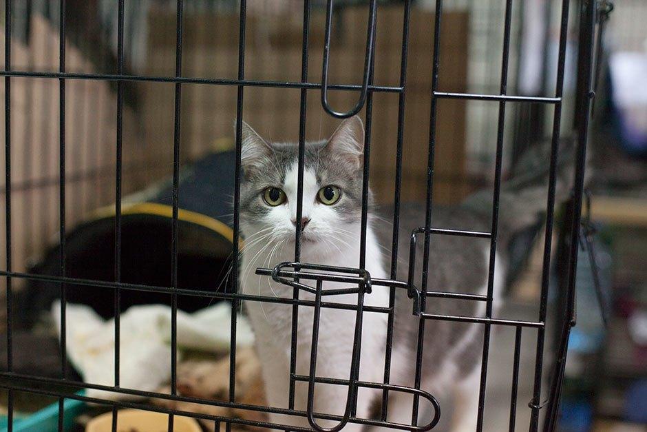 Коты иты: Как помочь брошенным животным. Изображение № 3.