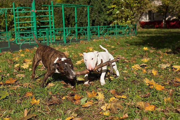 О чем следует знать, прежде чем заводить собаку. Изображение № 10.