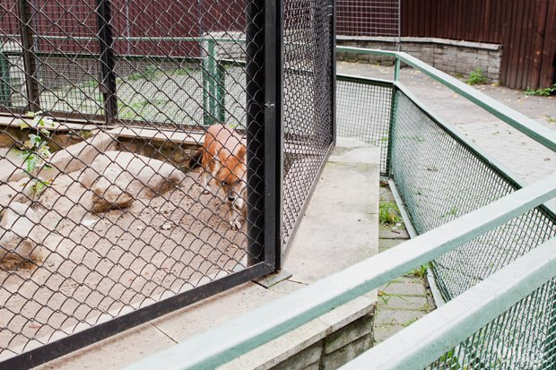 Директор московского зоопарка: «Погода была ужасной, всё выглядело очень грустно». Изображение № 10.