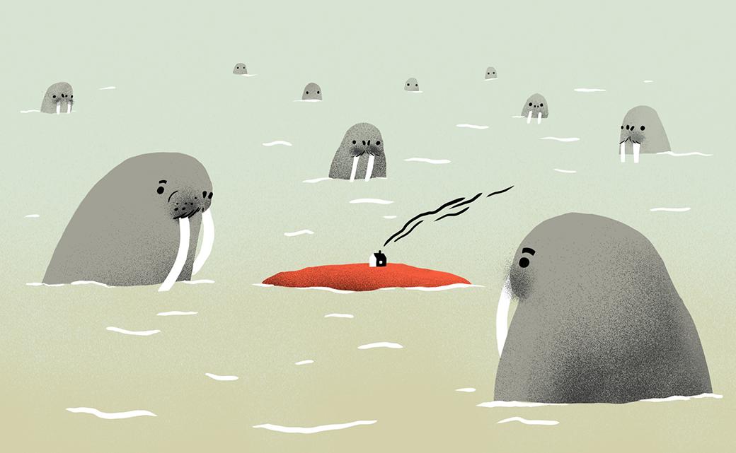 Чукотский полярник — о жизни нанеобитаемом острове и отношениях с дикими зверями. Изображение № 2.