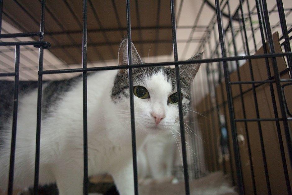 Коты иты: Как помочь брошенным животным. Изображение № 9.