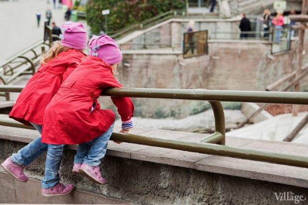 Директор московского зоопарка: «Погода была ужасной, всё выглядело очень грустно». Изображение № 14.