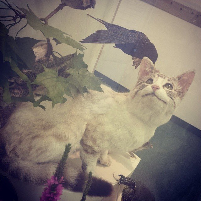 Музейные коты вснимках Instagram. Изображение № 12.