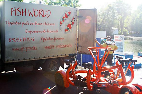 Изображение 23. В Голицынский пруд Парка Горького выпустили 400 кг рыбы.. Изображение № 6.