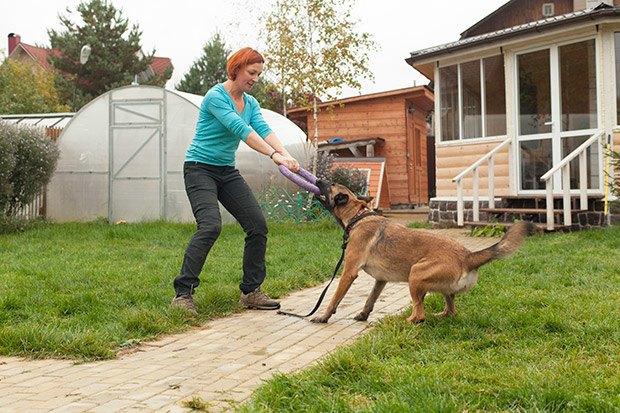 О чем следует знать, прежде чем заводить собаку. Изображение № 14.