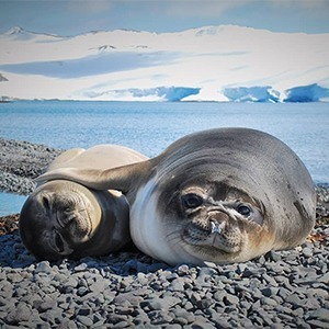 На кого подписаться: Познавательный инстаграм Арктического и антарктического НИИ