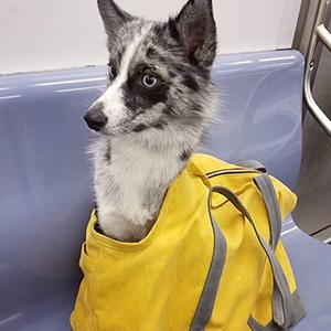 На кого подписаться: Инстаграм о собаках в сумках — Жизнь на Wonderzine