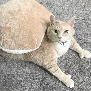 На кого подписаться: Большой кот Бронсон, продвигающий ЗОЖ