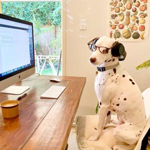 На кого подписаться: Деловые собаки, которые работают из дома — Жизнь на Wonderzine