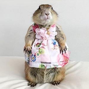 На кого подписаться: Луговая собачка в роскошных платьях — Жизнь на Wonderzine