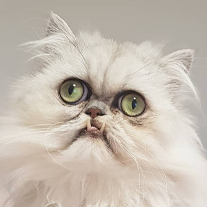На кого подписаться: Кот Уилфред, чей взгляд невозможно забыть — Жизнь на Wonderzine