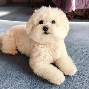 На кого подписаться: Счастливая собака Валерия Сюткина — Жизнь на Wonderzine