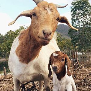 На кого подписаться: Счастливое козлиное семейство — Жизнь на Wonderzine