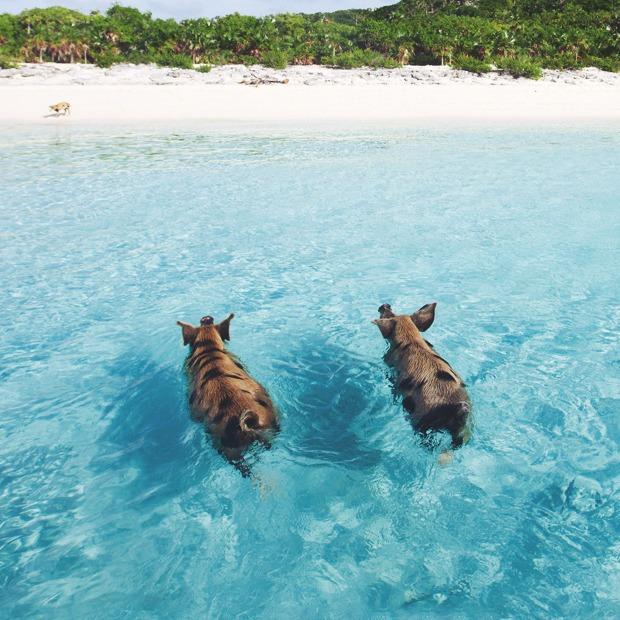 Идеи для путешествий: Необычные пляжи мира