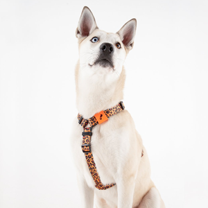 Забавная леопардовая шлейка для собаки Staya  — Вишлист на Wonderzine