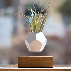 Вингардиум левиоса: Горшок с цветком,  парящий в воздухе