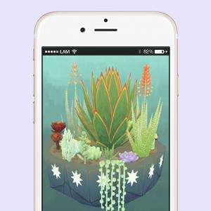 Что скачать: Виртуальный мини-сад суккулентов Viridi — Жизнь на Wonderzine