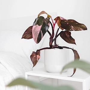 Правда ли, что комнатные растения очищают воздух? — Здоровье на Wonderzine
