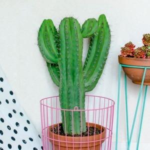 Альбом о растениях в большом городе Urban Jungle — Вишлист на Wonderzine
