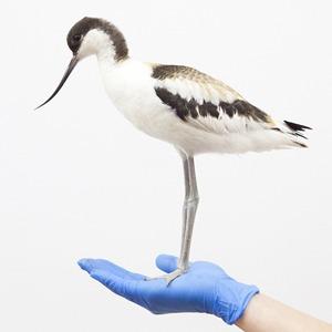 «Birds Don't Cry»: Сова, чайка и другие постояльцы приюта для птиц