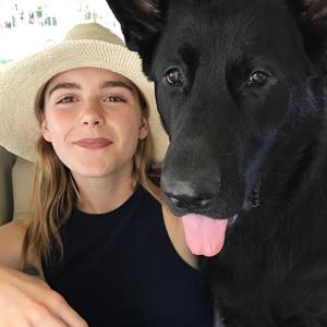 На кого подписаться: Собака Кирнан Шипки — Фрэнки — Кино на Wonderzine