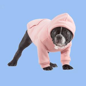 Вопрос эксперту: Нужна ли собакам одежда зимой
