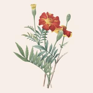 «Карма» и этичное сырьё: Саймон Константин о парфюмерии Lush — Красота на Wonderzine