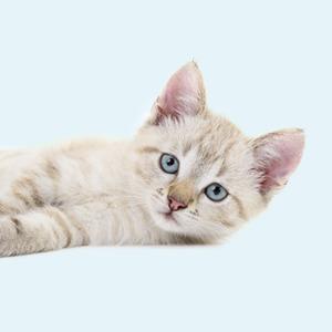 В закладки: Генератор кошачьего мурлыканья Purrli — Жизнь на Wonderzine