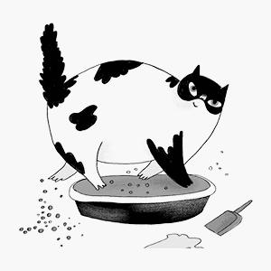 Книга «Котологика. О чём молчит кошка» — Вишлист на Wonderzine