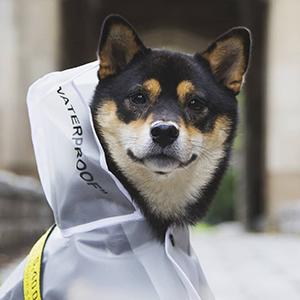 Бобик в Pupreme:  Как одежда для собак завоёвывает модную индустрию — Стиль на Wonderzine