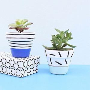 Мои зелёные друзья: 20 инстаграмов с сочными растениями