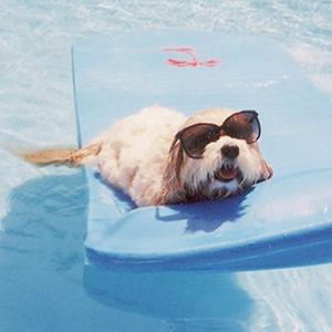 На кого подписаться: Инстаграм с неочевидными собаками в кино
