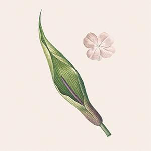 Как пахнут первая любовь и депрессия: Парфюмеры о важных моментах в жизни — Красота на Wonderzine