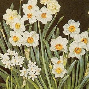 На кого подписаться: Инстаграм о растениях с картин — Жизнь на Wonderzine