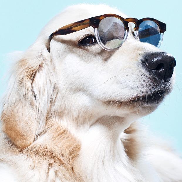 Ревизия: Солнцезащитные очки