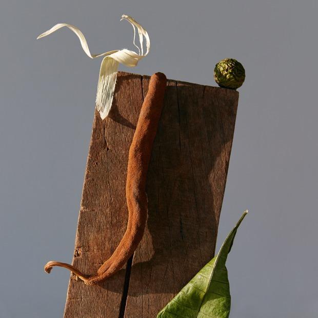 «Kælǣ koṭas»: Лесные скульптуры в фотопроекте Юли Татарченко — Фотопроект на Wonderzine
