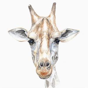 Ужасы дикой природы: Я спасаю животных от людей — Профессия на Wonderzine