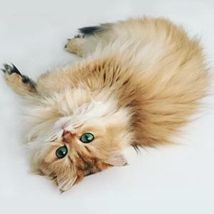 На кого подписаться:  Кошка Смузи божественной красоты — Жизнь на Wonderzine