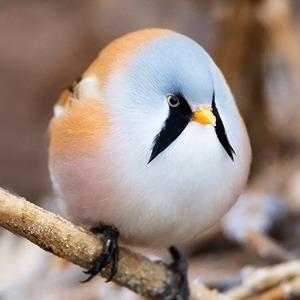 На кого подписаться: Твиттер о круглых зверях и птицах — Жизнь на Wonderzine