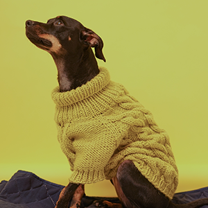 Тёплый свитер для собак Mirstores и I Love Dogs