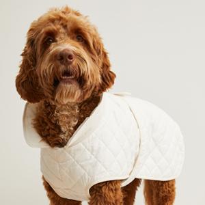 Стёганая куртка для собаки H&M  — Вишлист на Wonderzine