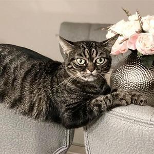 На кого подписаться: Вечно недовольная кошка Киця — Жизнь на Wonderzine