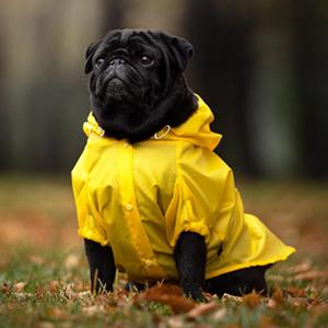 Дождевик для собаки Banana Dog  — Вишлист на Wonderzine