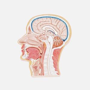В закладки: Виртуальная семантическая карта мозга — Жизнь на Wonderzine