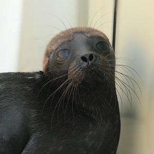 Дикий Вовчик — тюлень, который так и не полюбил людей — Guilty Pleasure на Wonderzine