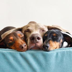 На кого подписаться: Инстаграм собачьего семейства — Развлечения на Wonderzine