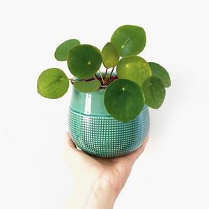 На кого подписаться: #plantparenthood — хештег о любви к растениям — Жизнь на Wonderzine