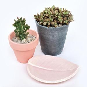 На кого подписаться: Российский магазин с растениями и керамикой Potanica — Жизнь на Wonderzine