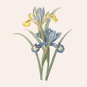 От отдушек к духам: Парфюмерка Lush Эмма Дик о том, как придумать ароматы для жизни — Красота на Wonderzine